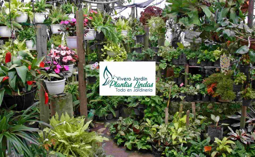 Vivero Jardin Plantas Lindas