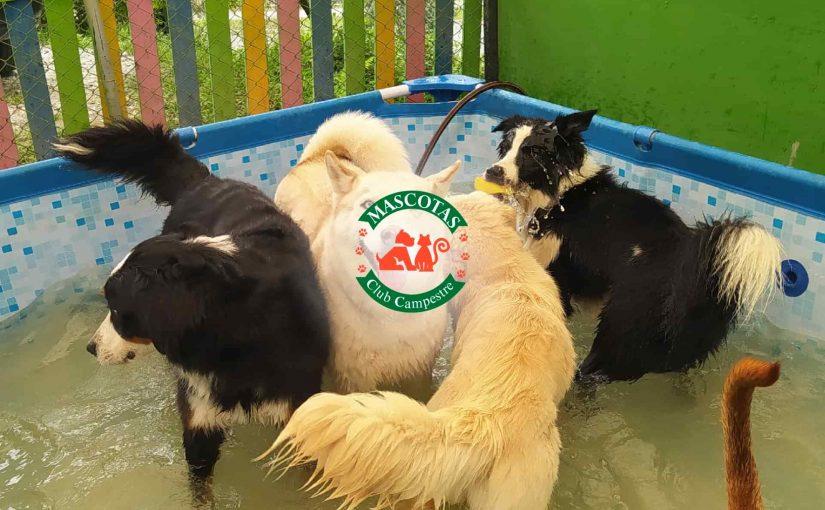 Mascotas club campestre